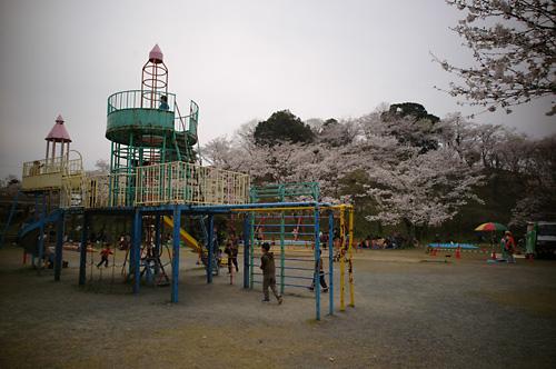 080407sakura_park01