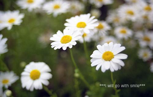080501_flower