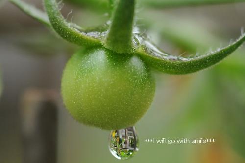 080530_tomato