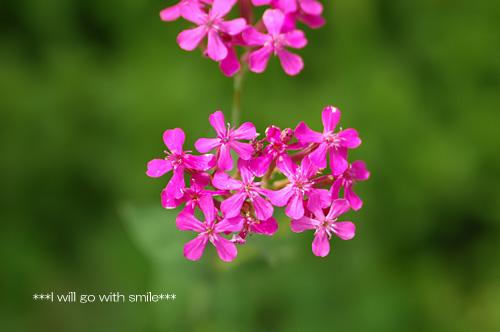 080601_garden02