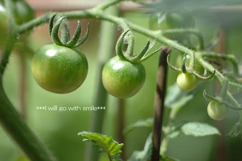 080601_garden03