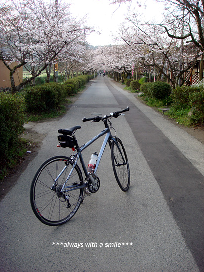 090324sakura01