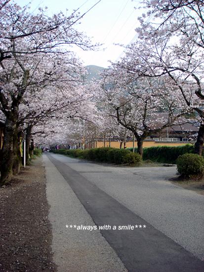 090324sakura02