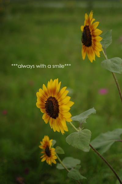090627flower