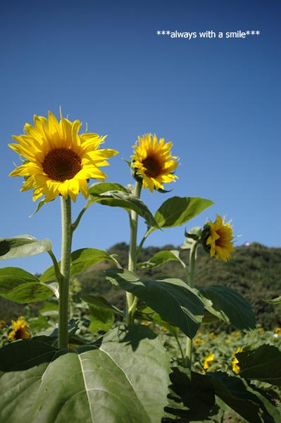 090921flower02