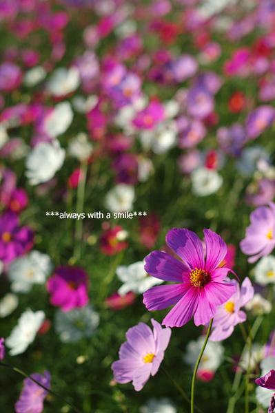 091023flower