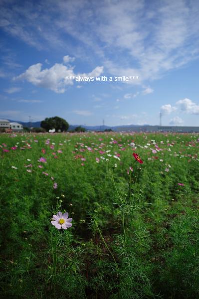 091023flower01
