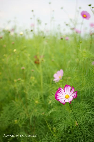 101016flower01