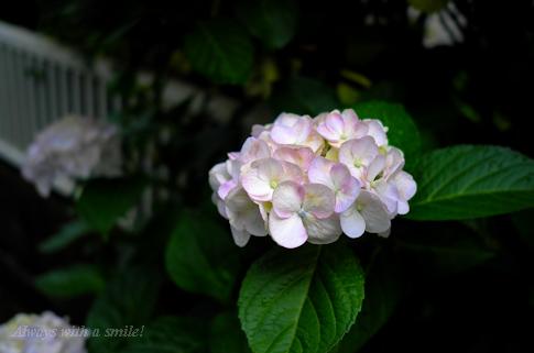 110615flower