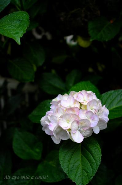 110615flower001