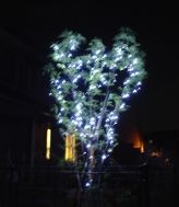 041205_tree.jpg